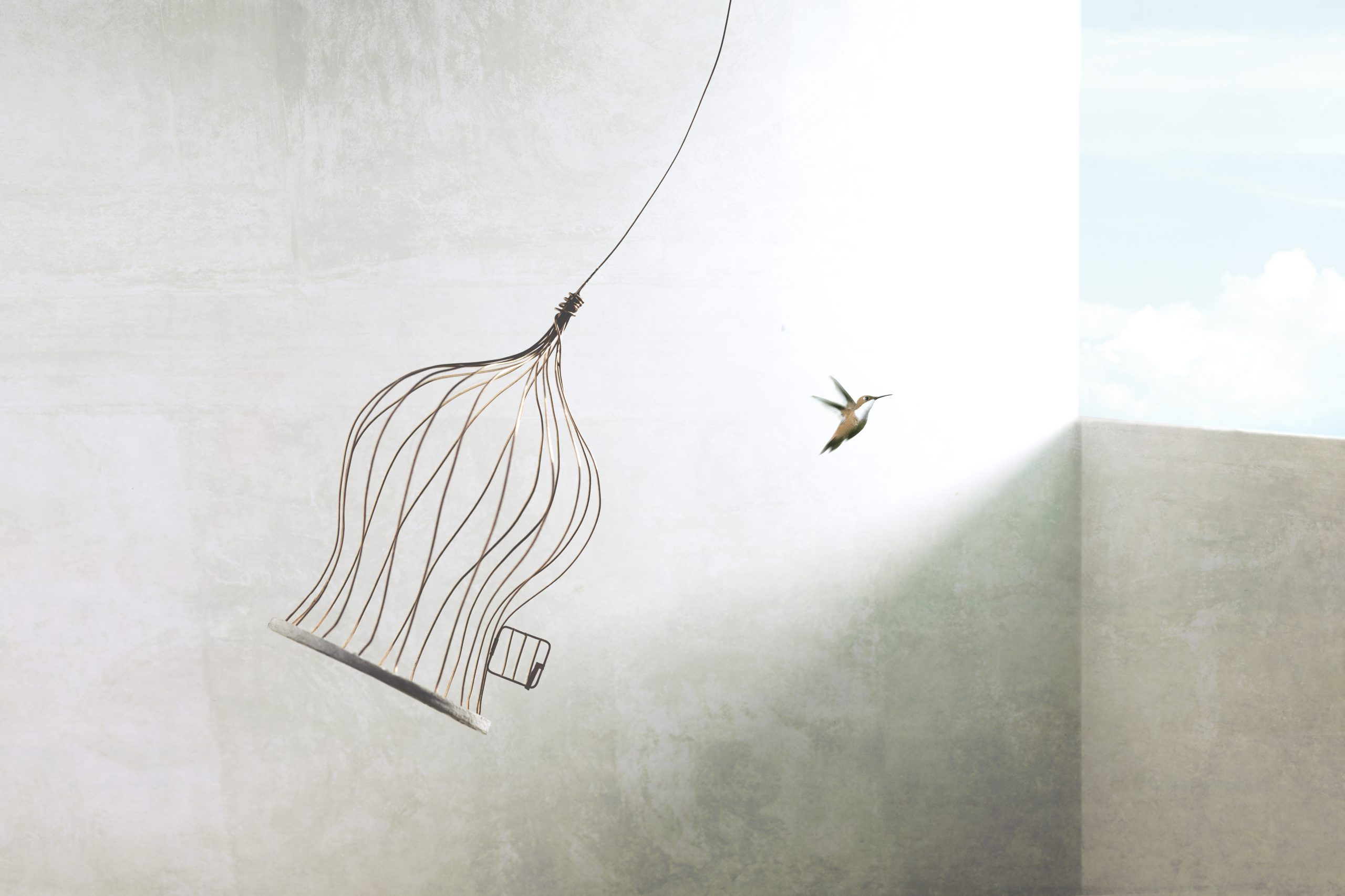 little birds escapes out of birdcage